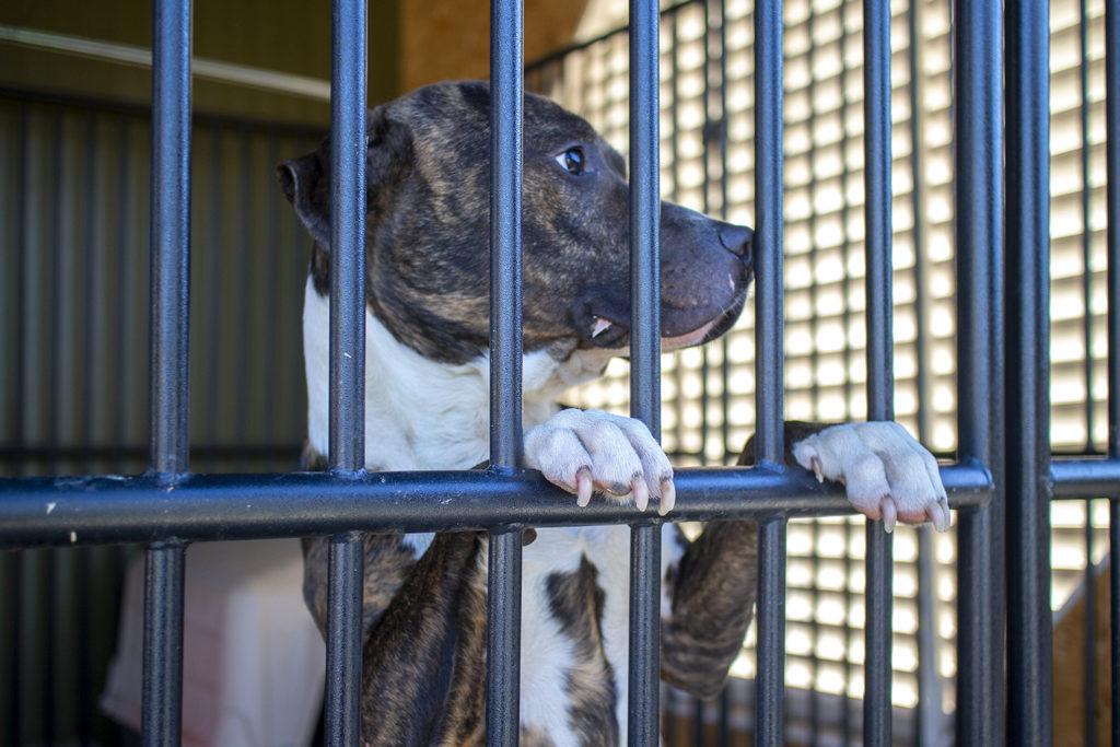 Mojo, rescue dog at Stone Soup Animal Rescue